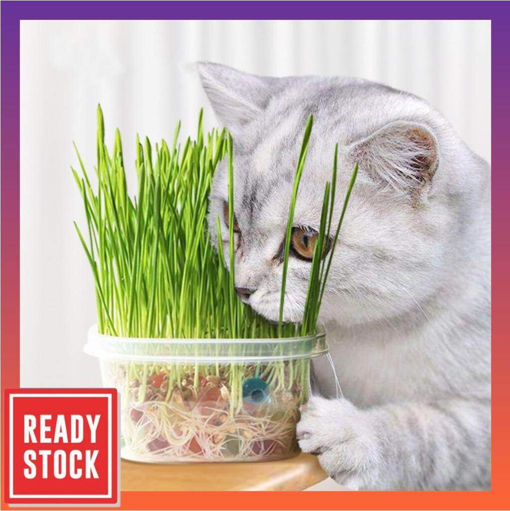 Green Growers Pet Grass With Crystal Balls - Self Grow Kit - Rumput Kucing