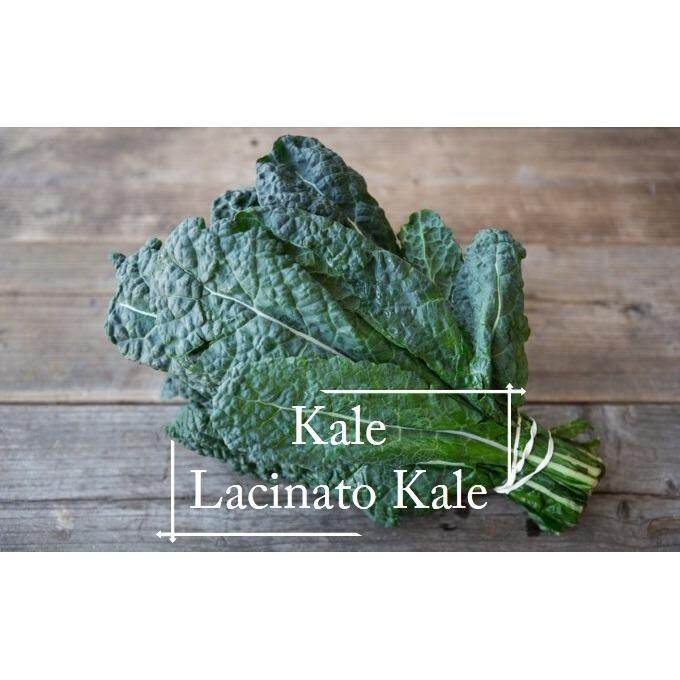 Lacinato Kale seeds- 50 seed