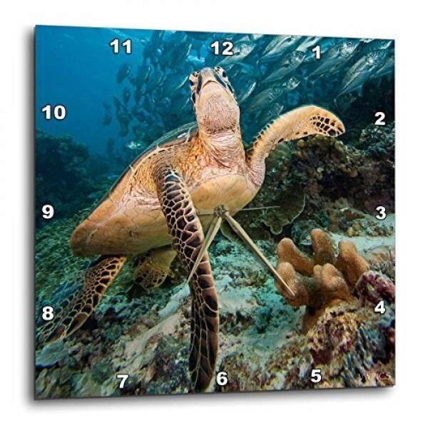 3dRose LLC Green Sea Turtle/Chelonia Mydas/Schooling Bigeye Jacks/Caranxsex Fasciatussipidan Island/Malaysia 10 by 10-Inch Wall Clock - intl