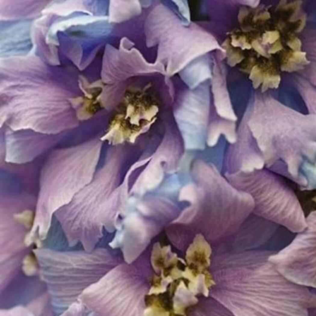 Penjualan Baru Sunweb 60 Pcs Dendrobium Rhynchostylis Biji Anggrek Langka Bibit Biji Bunga Taman-Internasional
