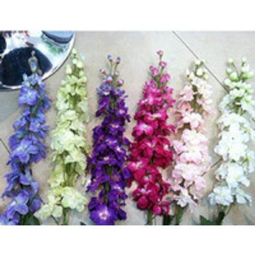 3x Consolida Flower Seeds- LOCAL READY STOCKS