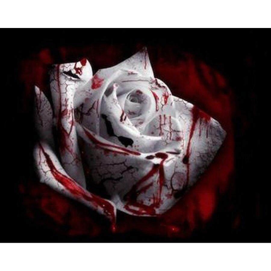 3x Packs Heirloom White Blood Rose Flower Seeds- LOCAL READY STOCKS