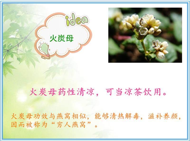 Chinese Knotweed 1.jpg