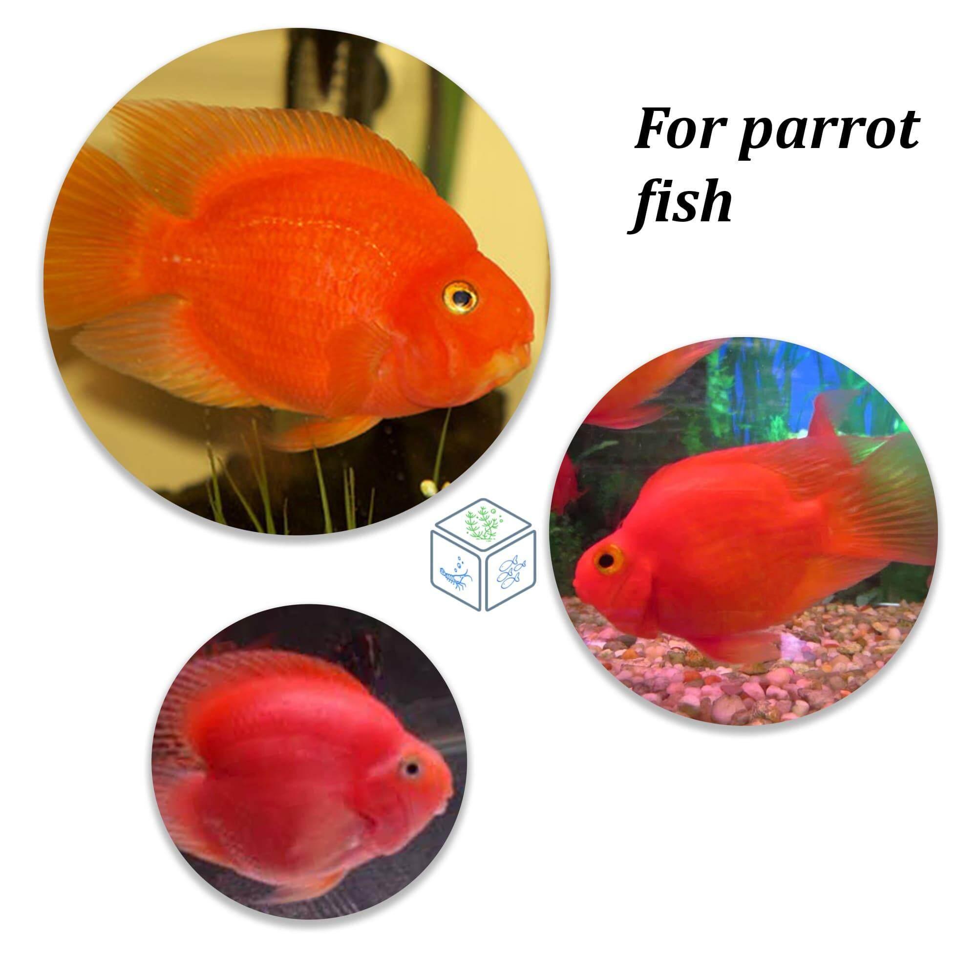 Hikari Blood Red Parrot 333g (Mini) Parrot Fish Food