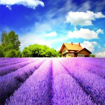 Harga 5D DIY Diamond Painting Home Decor (Lavender)