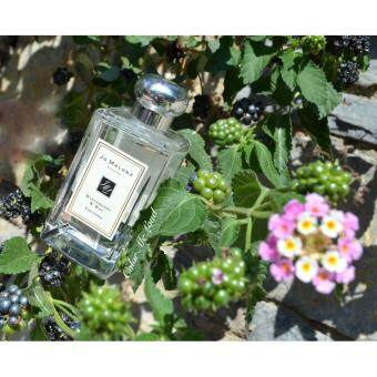 Harga Jo Malone Blackberry & Bay Cologne London 100ml - (Original Tester)