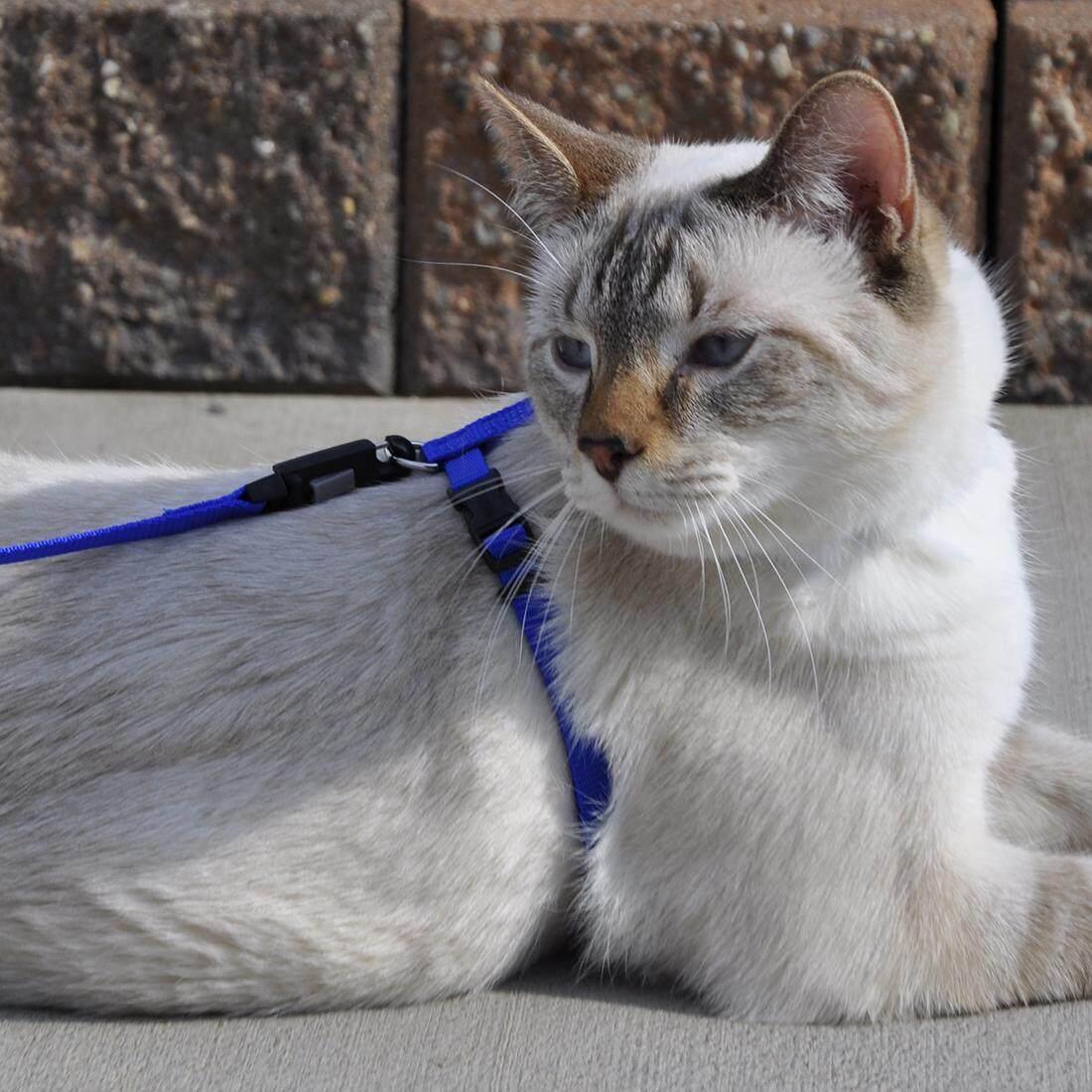"[Coastal] Figure ""H"" Adjustable Nylon Cat Harness Size 3/8"" - Blue"