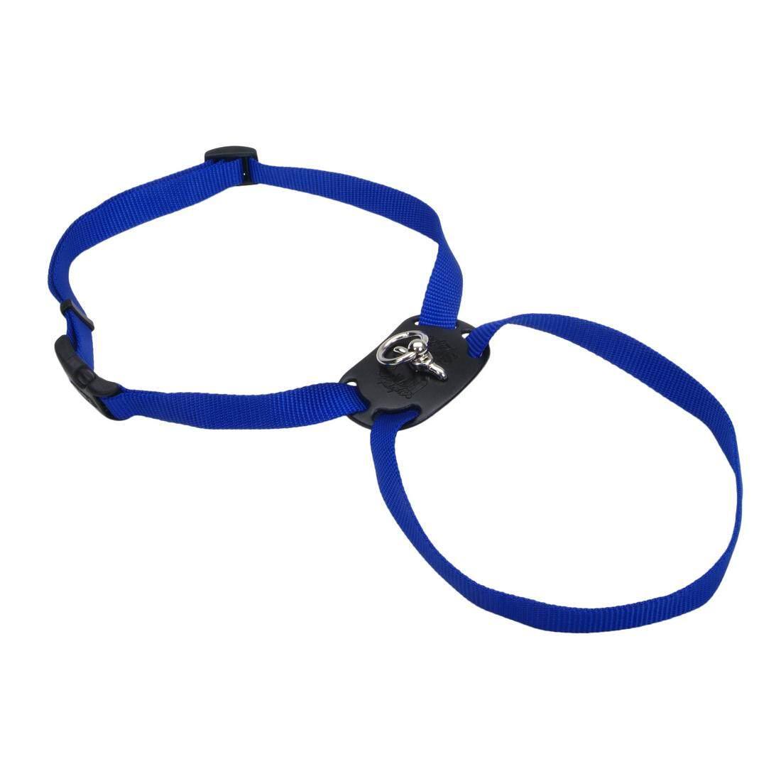 """[Coastal] Harness Right Size 3/8"""" - Extra Small - Blue"""