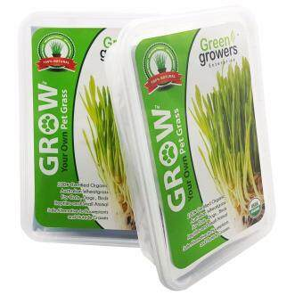 Harga Green Growers Pet Grass - Self Grow Kit