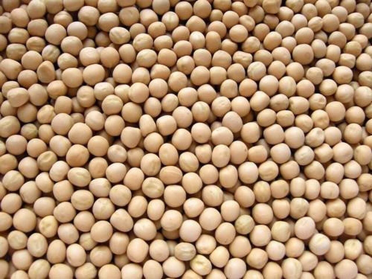CHOTPOTI DAL/ DRIED WHITE PEAS (DAL FOR COOKING CHATPOTI) - 500 GM
