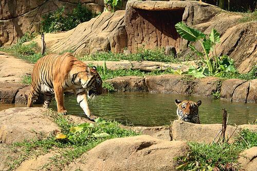 [Theme Park] A'Famosa Safari Wonderland + Packed Lunch Entrance Ticket (Melaka)