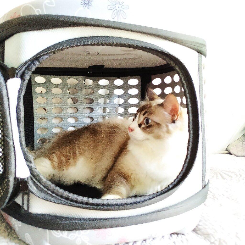 (NEET NEKO) Pet Carrier Bag for Long Distance Travel / Large but Fordable/ Pet Bag