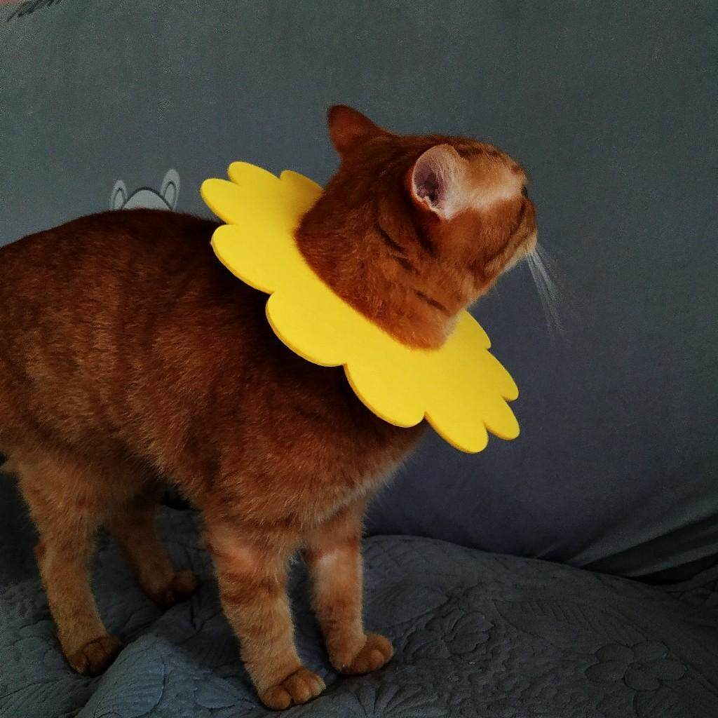 (NEET NEKO) Flower e-collar for Cats /Anti-scratching/ fungus at ear / tangle at neck