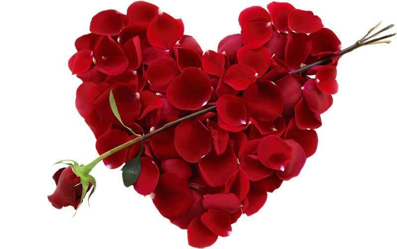 French Rose TeaSkin Beauty