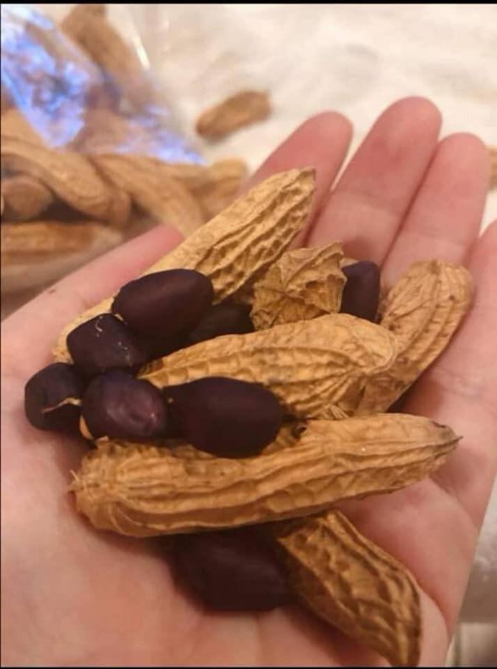 [ Direct From Ipoh Farm ] 3X150gm Freshly Oven Baked Oil Free Black Peanut Kacang Hitam Original Flavour Health Snack Snek Sihat Ipoh Menglembu Malaysia Farmer Local Stock