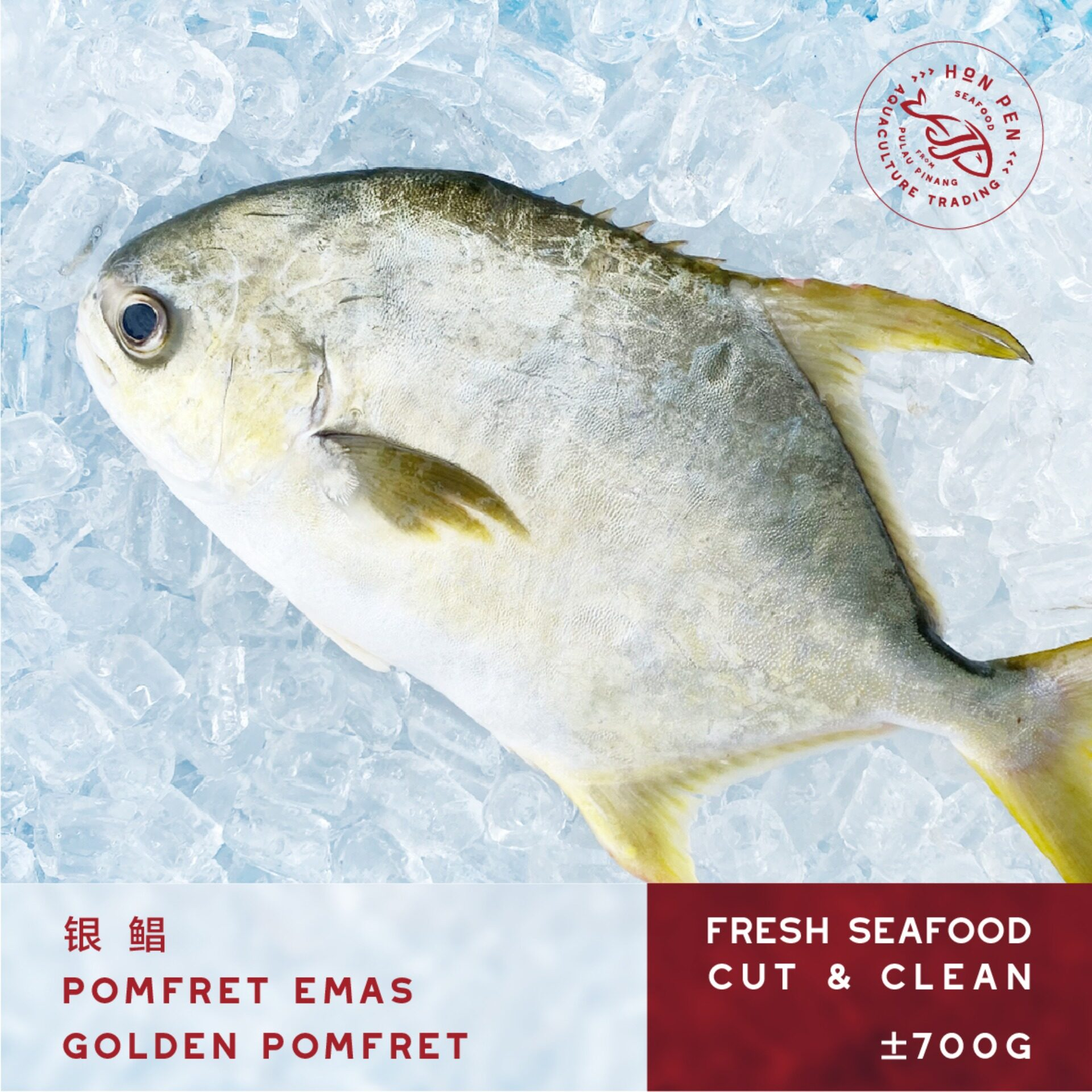 2pcs GOLDEN POMFRET 银鲳 POMFRET EMAS (Seafood) ±700g