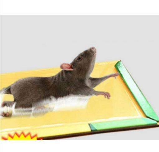 Ready Stock - Perangkap Tikus Papan Bergetah Mouse & Rat Glue Traps