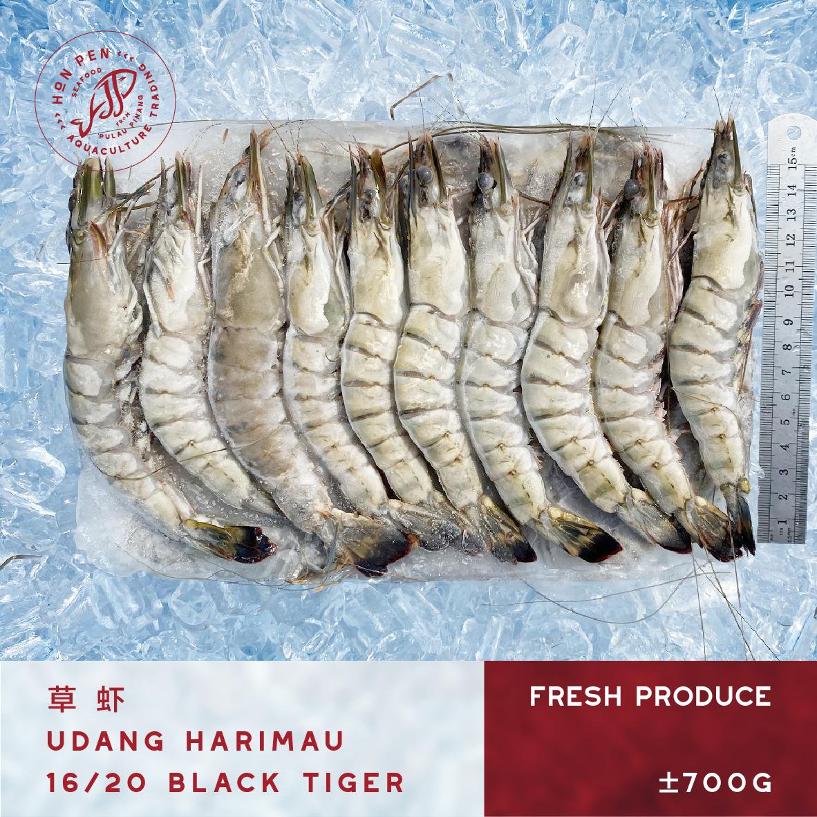 BLACK TIGER 16/20 草虾 UDANG HARIMAU (Seafood) ±700g