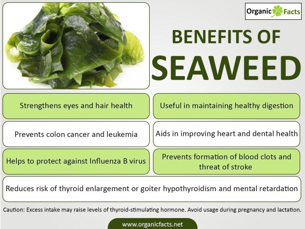 Opika Premium Sea Birds Nest Natural Dried Seaweed 100g