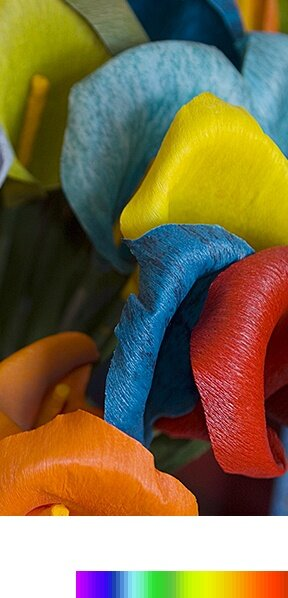 Wider color spectrum bar and bright and clear flower image explains purcolor