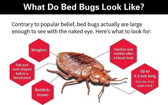 Bites That Look Like Bed Bugs But Aren